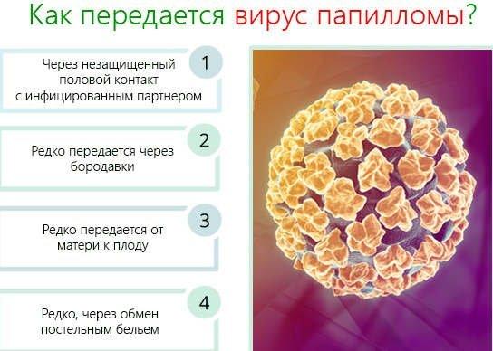 Вирус папилломы человека 6 53 тип
